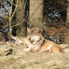 Ein Besuch im Wildpark Bad Mergentheim