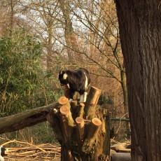 Tiere hautnah erleben im Tierpark Nymphaea in Esslingen