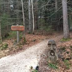Walderlebnispfad am Herrenbachstausee – Ein toller Familienspaziergang
