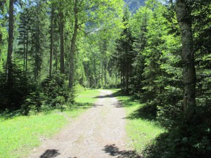 Plansee_Weg durch den Wald