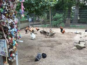 Wildpark Pforzheim Kinderbauernhof Hühnergehege