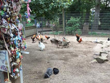 Hühnergehege wildpark pforzheim kinderbauernhof hühnergehege kinder spielzeit de