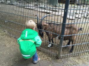Wildpark Pforzheim Ziegen füttern