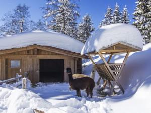 Kinderhotel Oberjoch Minizoo Alpakas