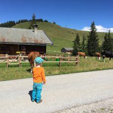 Loferer Alm – Wandern mit Kindern zwischen Kühen und Almen