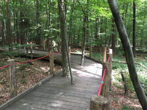 Haus des Waldes _Auf dem Walderlebnispfad