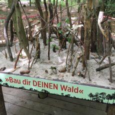 Ein Besuch im Haus des Waldes in Stuttgart – Spielerisch den Wald verstehen
