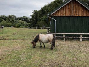 Pony im Westküstenpark