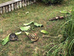Schildkröten im Westküstenpark