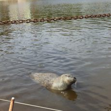 Tiere schauen im Westküstenpark – Robbarium und Puppentheater inklusive