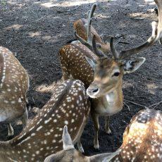 Wildgehege Spandauer Forst – Spazieren, spielen und Tiere beobachten