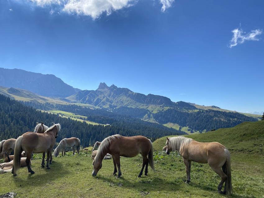 Pferde beim Zallinger
